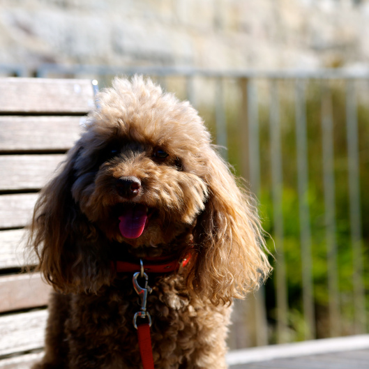 Bella outside Waverley Cemetery (Image by LM for TSL)