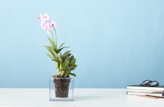 boskke-cube-orchid