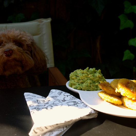 Bella sneaking into the tostones shot... (Image by TSL)