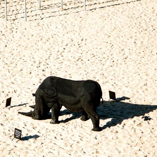 TSL Gift of the Rhinoceros