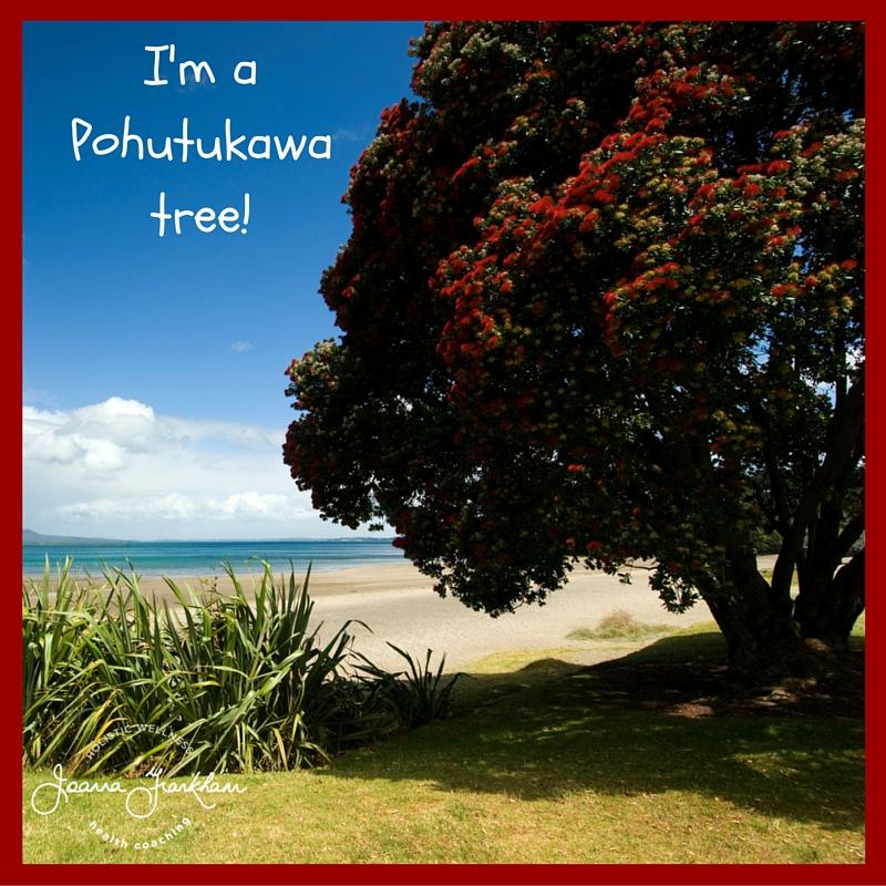 JFC Pohutukawa