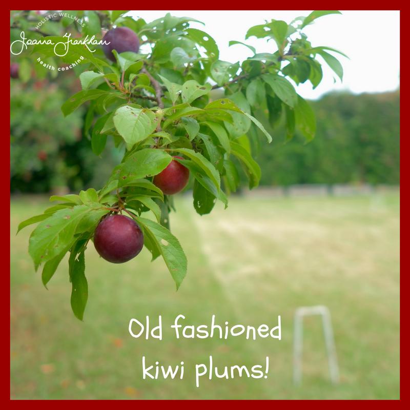 Kiwi Plum Tree