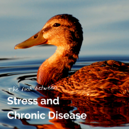 Stress and Chronic Disease