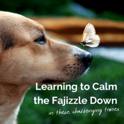 Learning to Calm the Fajizzle Down